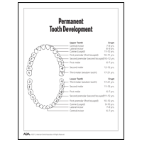 Diagram showing permanent teeth development