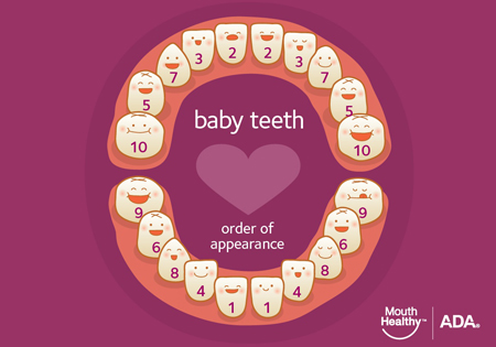 Baby Teeth eruption chart