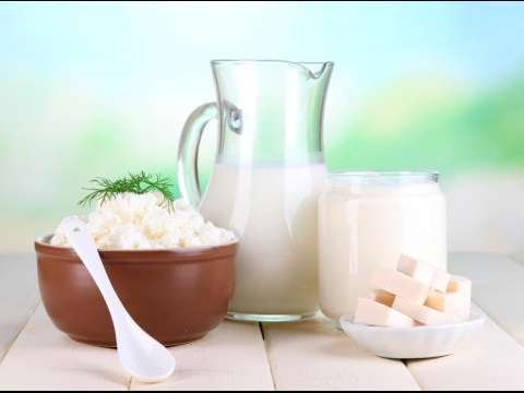 dairy foods photo